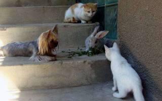 Кошки и их брат кролик живут вместе в гармонии мурлыкания