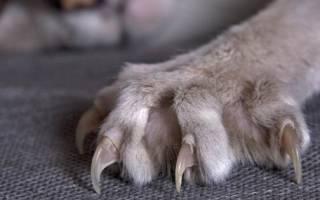 Когтерезка для кошек: ножницы, гильотинные, секаторы, как стричь