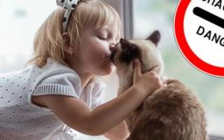Почему нельзя целовать кошек, возможные заболевания