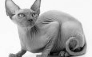 ТОП 24 пород кошек для детей: какую выбрать, 74 фото