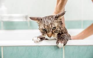 Можно ли мыть кошку обычным шампунем для людей, а если его нет