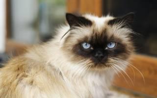 У кота, кошки текут слюни изо рта: почему, что делать дома