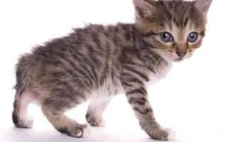Как определить возраст котенка: ТОП способов, поведение, внешность