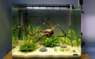 Большой аквариум: запуск, обустройство, нюансы!