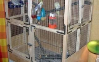 Как сделать вольер для попугаев своими руками — на улице или в квартире