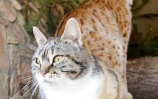 История трогательной дружбы 87-летней женщины и ее кота