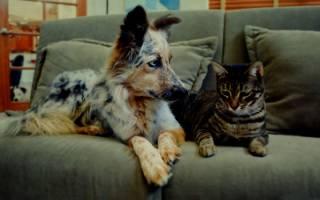 Выбираем диван, которому не страшны кошачьи коготочки