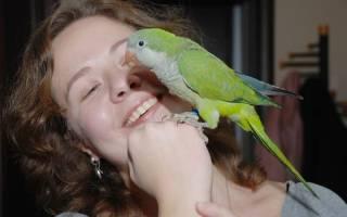 Какие попугаи разговаривают — породы которые учатся лучше всех