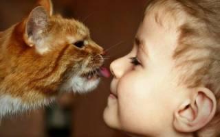 Чем можно заразиться от кошки человеку: 8 опасных заболеваний
