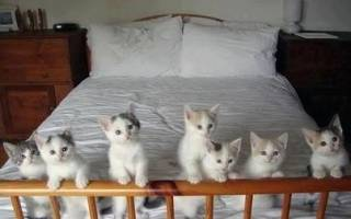 К чему снятся котят: что означает сон с ними, разные толкования