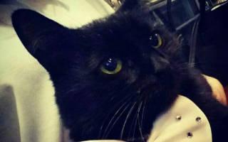 У кота Бегемота появился пушистый заместитель Изюм