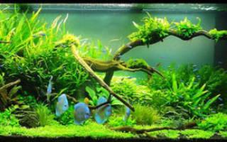 Что нужно для аквариума? Советы!