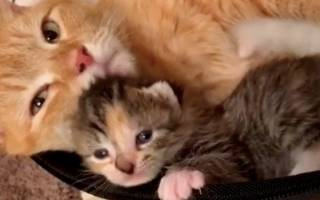 Пяти осиротевшим рыжим котятам помогли как раз вовремя