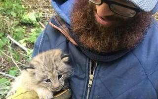 Мужчина спас «обычного» котенка, который оказался рысенком