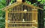 Как чистить клетку волнистого попугая