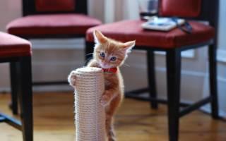 Как приучить котенка, кошку или кота к когтеточке: правила, возраст