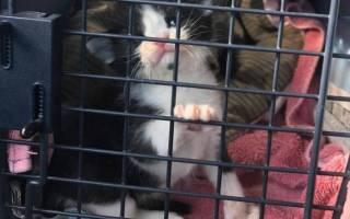 У котенка, спасенного от неминуемой смерти, появилась новая семья