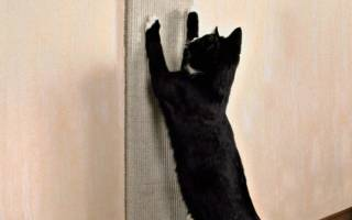 Как отучить кота, кошку драть мебель и обои в квартире: 4 способа