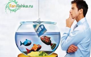 Сколько стоит аквариум, обзор цен