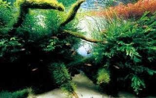 Каких аквариумных рыбок завести?