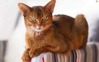 Много фото красивой кошки Маши, смешная и ласковая