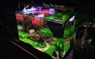 Котики и рыбки в аквариуме (GIF и фото подборка)