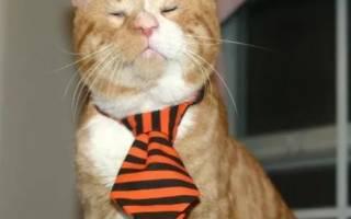 История о том, как слепой рыжий кот обрел дом