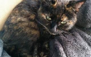 Кошка Нала вернулась домой с запиской на ошейнике