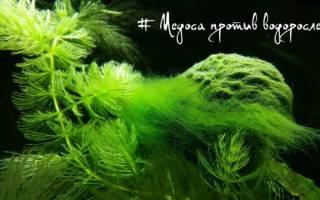 Продукция Медоса VladOx для аквариума