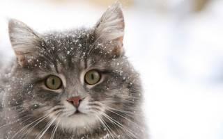 Верный кот навещает могилу хозяина и приносит туда подарки