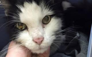 Изможденный голодом кот обретает счастье и новый дом