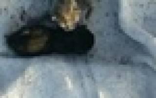 Крошечных котят, обнимающих свою сестру, нашли на улице