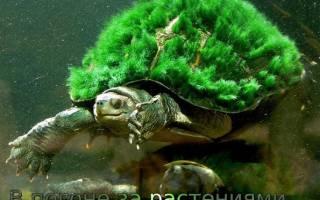Купить аквариумные растения: где лучше и недорого?