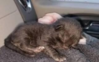 Бездомная кошка просит у людей спасти ее малыша