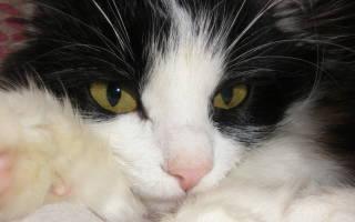 Как первобытная кошка пришла к человеку и, главное, зачем? И при чем тут женщины?