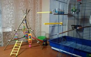 Как сделать игровую площадку для попугая своими руками — инструкция