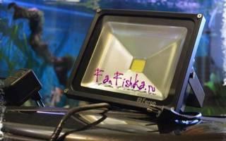 Освещение аквариума своими руками: светодиодные прожектора в аквариуме