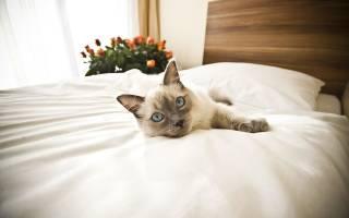 Приговор моей девушки: избавишься от кота и мы будет вместе