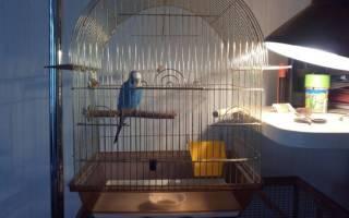 Ультрафиолетовая лампа освещения для попугаев