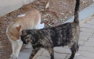 Любви все особи покорны: ночное свидание кошки и кролика