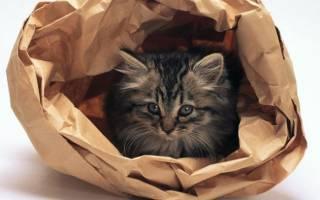 Кот в мешке: значение выражения, откуда пошло, аналоги