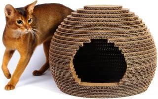 Как приучить кошку или кота к домику: 4 важных нюанса
