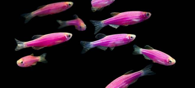 Аквариумные рыбки разведение ВИДЕОГАЛЕРЕЯ