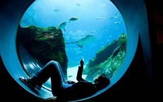 Параметры аквариумной воды: жесткость, pH и другие