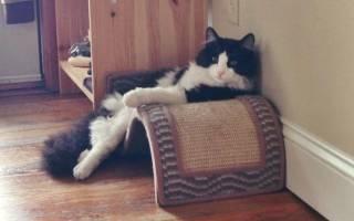 Лежак для кошки своими руками: как и из чего можно сшить, 14 идей