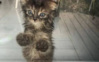 Крошечный котенок начинает новую жизнь после спасения