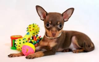 Большие собаки: описания пород с фото, особенности ухода и питания