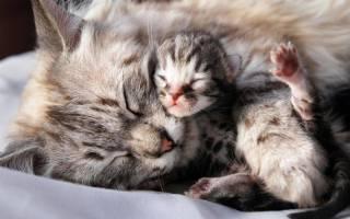 Когда открываются глаза у котят после рождения, от чего это зависит
