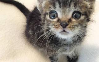История о двух мамах, в которой была замешана кошка