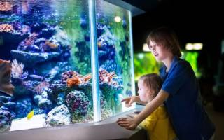 Аquarium for a child